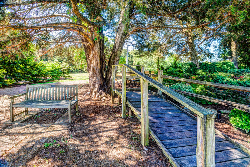 Bench Tree and Boardwalk-