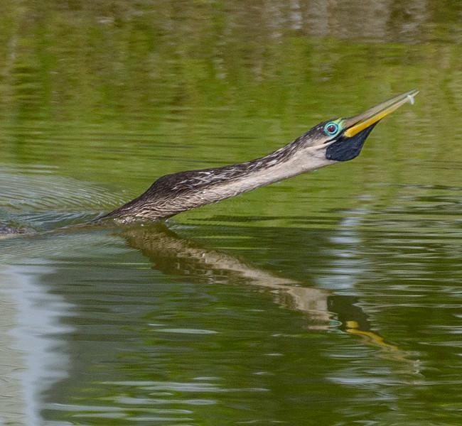 Wildlife Center - Swimming 2-0171