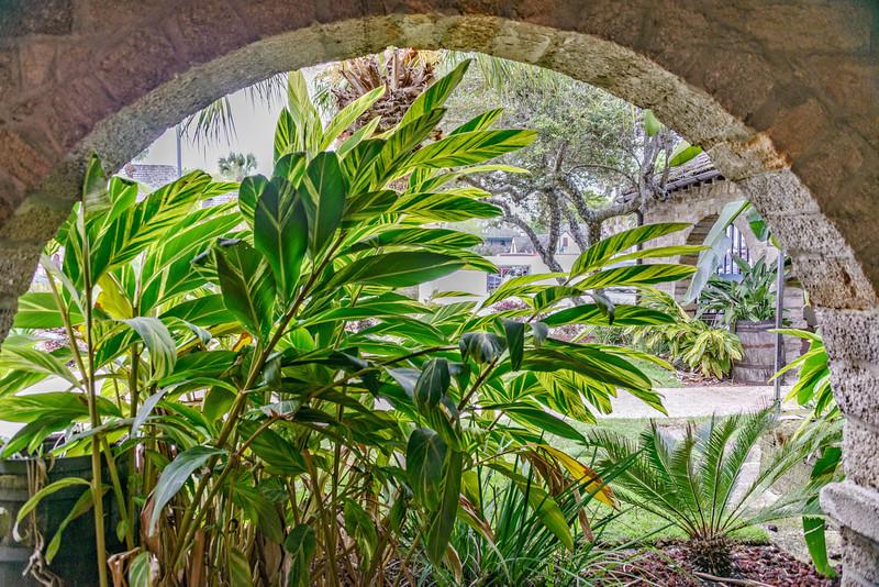 St Augustine - Plants through Arch-0122