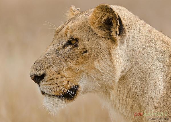 Kruger NP 2013