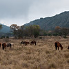 leshiba-landscape-horses-1
