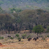 leshiba-wilderness-animals-1