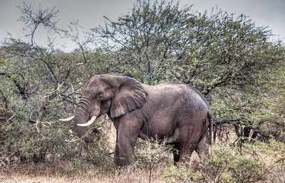 An elephant.  I must be in Africa!