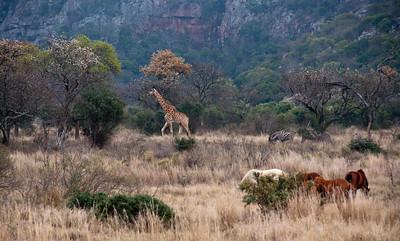 leshiba-animals-landscape-1