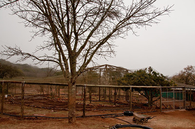 permaculture-garden-1