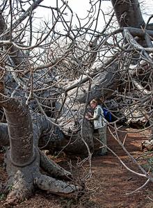 large-baobab-woman-2