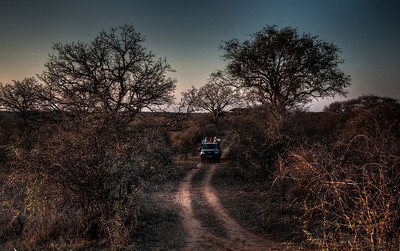 african-bush-safari-1