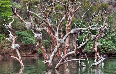 river-tree-bird-nests-1