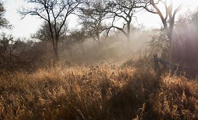 african-bush-fog-1