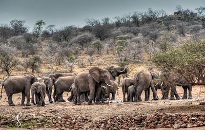 elephant-herd-1