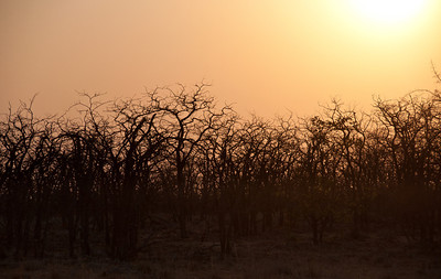 mapungubwe-sunset-1-2