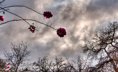 flowers-trees-clouds-1