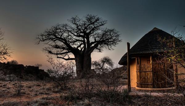 mapungubwe-camp-baobab-1