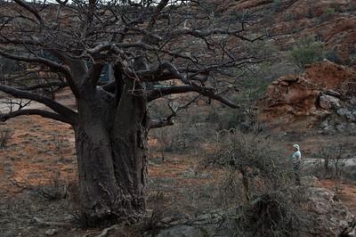 mapungubwe-baobab-woman-1