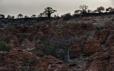 mapungubwe-baobabs-1