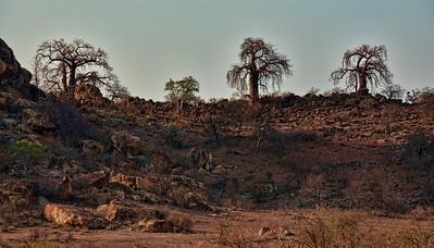 baobabs-landscape-1