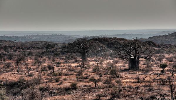 baobab-landscape-1