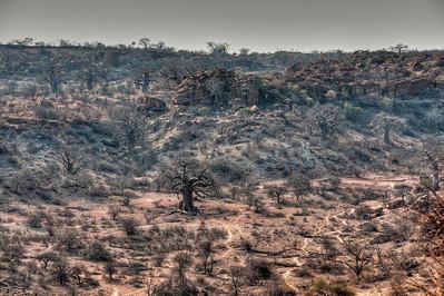 mapungubwe-baobab-landscape-1