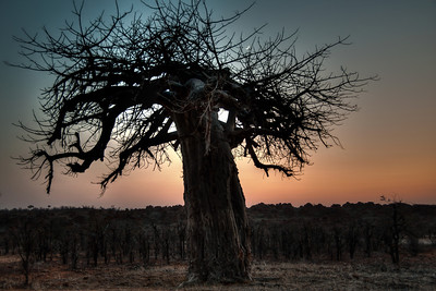 baobab-moon-sunrise-1