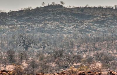 baobab-elephants-1