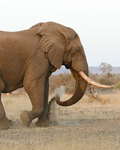 Dust and Tusks