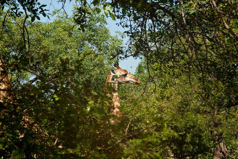 Raptors View