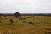 Lone WIldebeeste