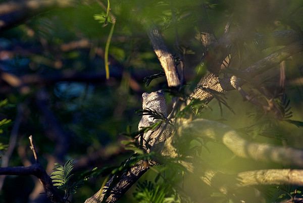 A Frog in a Tree (2 Photographs)