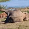 Addo Elephant Park - sleepy elephant, never saw one lying down before.