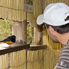Imfolozi - cheeky bird trying to steal cookies in the hide
