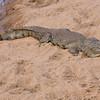 Imfolozi - Croc