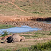 Addo Elephant Park - view from our rondavel of the waterhole at naptime.