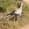 Addo - Secretary Bird
