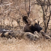 Imfolozi - pack of Wild Dogs - a rare sighting and a first for us (of course we had to leave for the airport, but what a way to end our stay at Mpila !)
