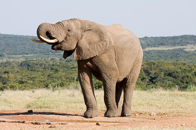 Best of South Africa Safaris 2012
