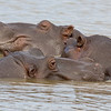St Lucia Boat Tour - Happy to be a Hippo