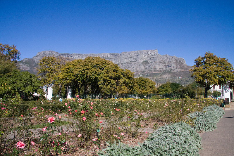 Company Gardens with Table Mountain in the backdrop