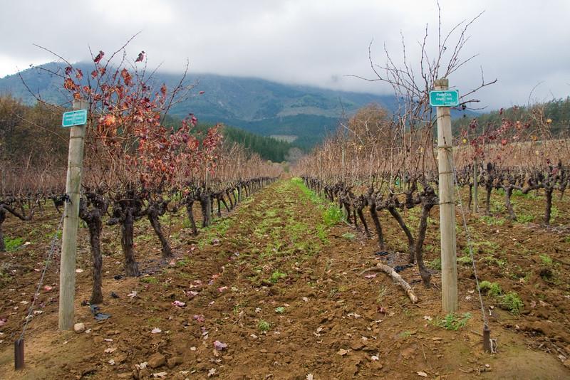 Stellenbosch - Delheim Wine Tasting