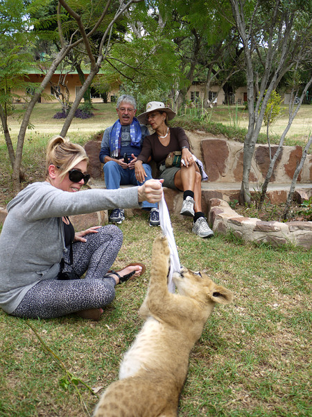 Mary plays with lion cub while Marino and Alicia watch.