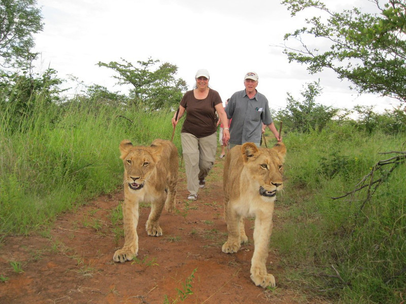 Terry and Gerry and two-year old lion cubs.  Terry and Gerry are the ones with the sticks.