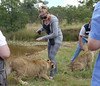 Mary follows instructions to pop the cub's nose when she gets out of line.  This lion likes her leopard-print pants.