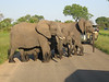 The elephants cross the road (see the three youngsters?) at Kruger.  Photo by Terry.