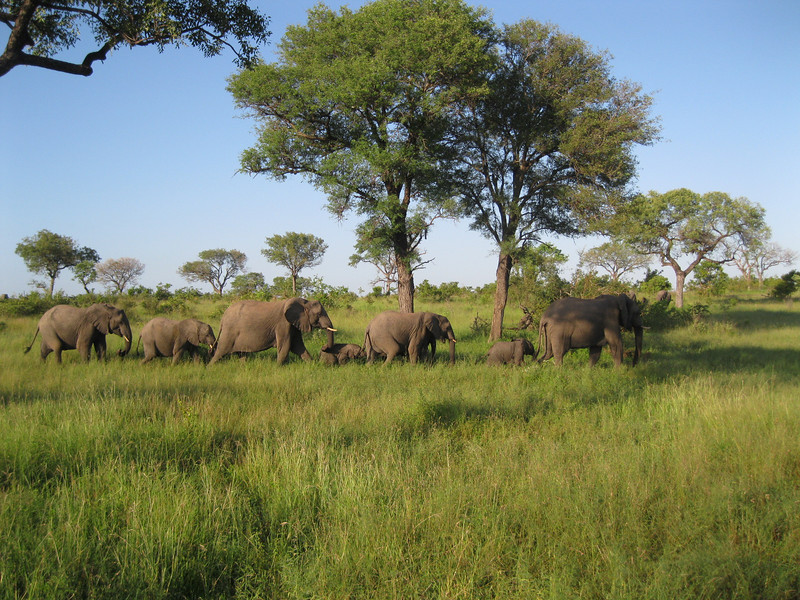 Wonderful photo of an elephant parade at Kruger. Photo by Terry.