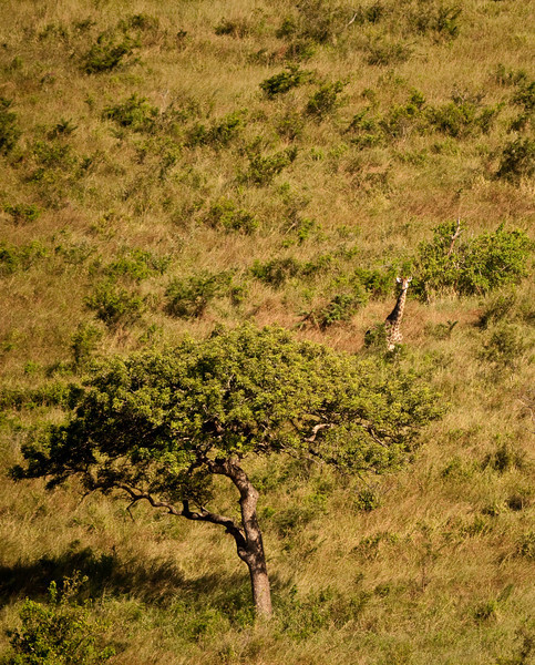 Can you spot the giraffe?  It has spotted us.  Hluhluwe Reserve
