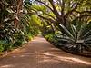 Kirstenbosch Botanical Garden. Cape Town.
