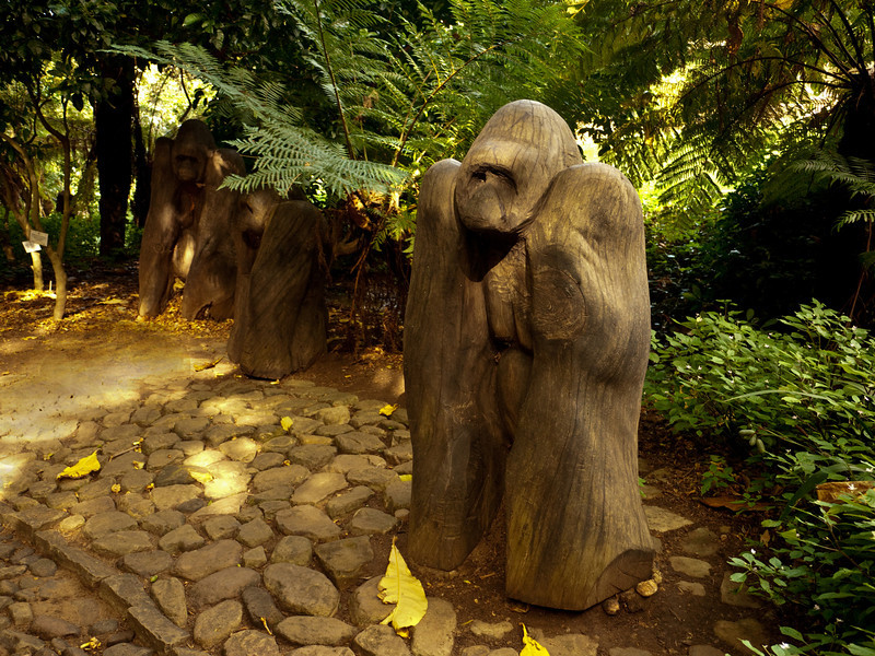 I love these life-sized gorilla sculptures at Kirstenbosch.  It looks as though the original tree wanted to become the gorilla.