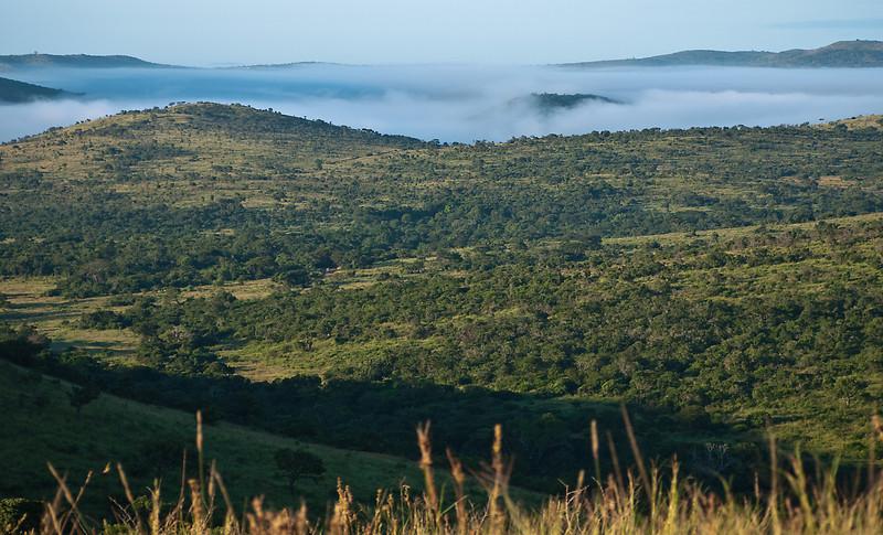 Foggy morning in Hluhluwe Reserve