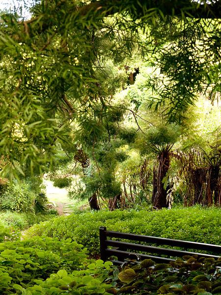 Another hidden garden view at Kirstenbosch