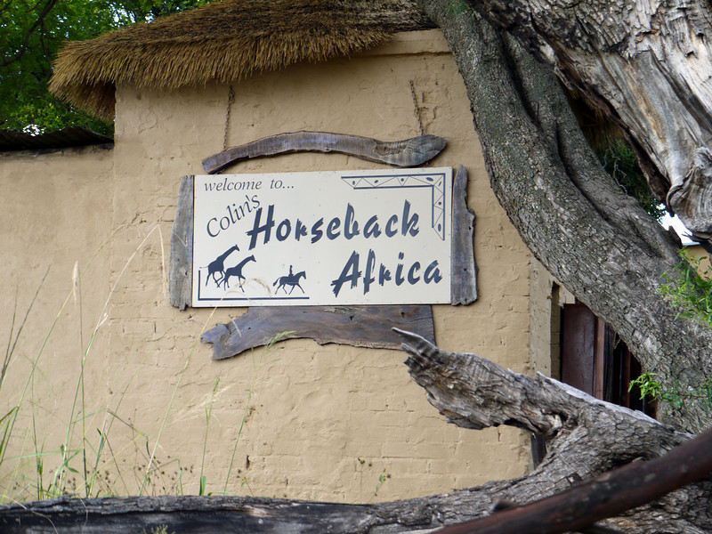 """This is MacRae's at Cullinan,Gauteng, South Africa.  We visit to""""walk with lions"""" (not ride horseback among giraffes)."""