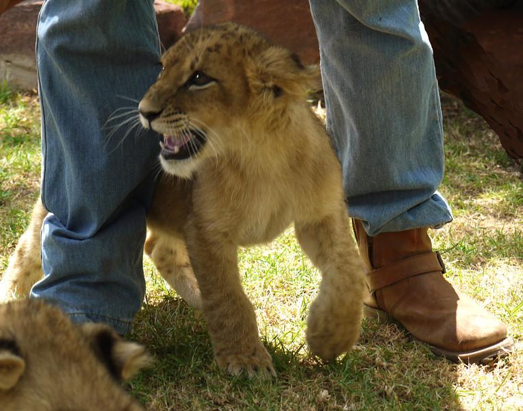 Fourteen-week old cub is enjoying herself.